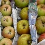 Apfelsortenbestimmmung